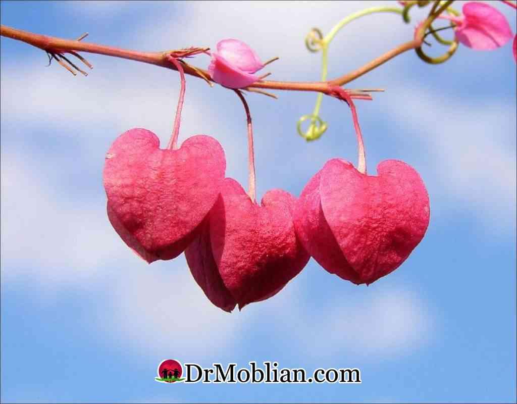 با ازدواج چه بر سر عشق می آید؟ 32