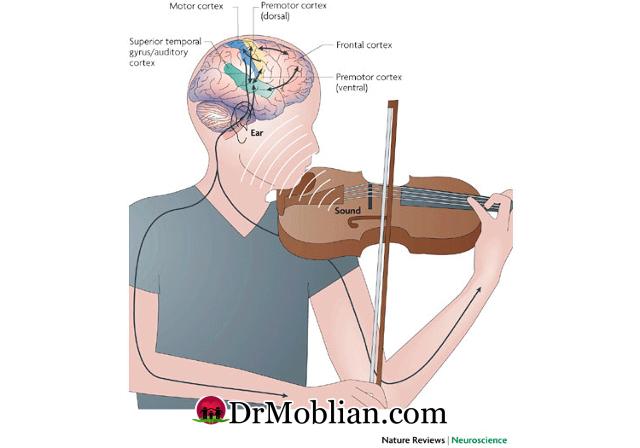 موسیقی و کارکرد مغز 2